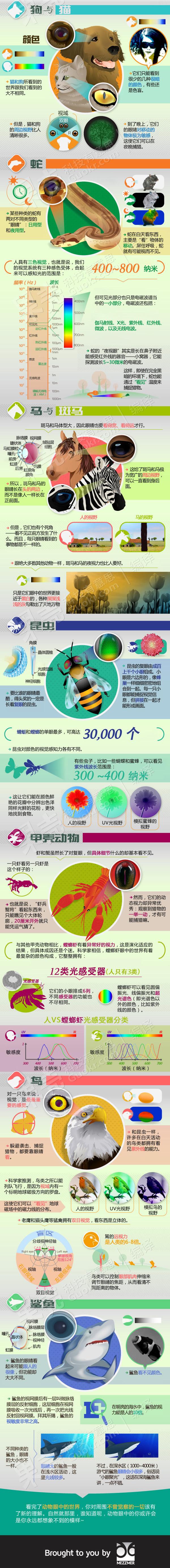 信息图表:动物眼中的世界